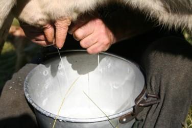 Friuli: Coldiretti lancia l'allarme, prezzo del latte in caduta libera, gli allevatori lavorano in perdita
