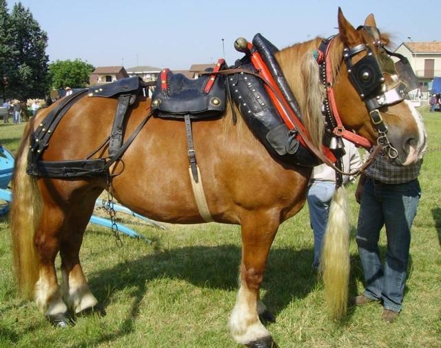 Cavalli da comprare cavalli da comprare il cavallo in for Quanto costa mantenere un cavallo