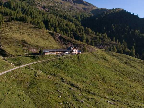 cagnon5 Orso in Trentino, SI o NO? Partecipa al Sondaggio